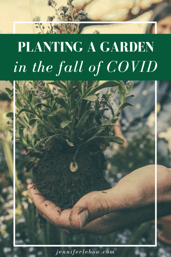 Why planting a garden is a great fall activity during COVID
